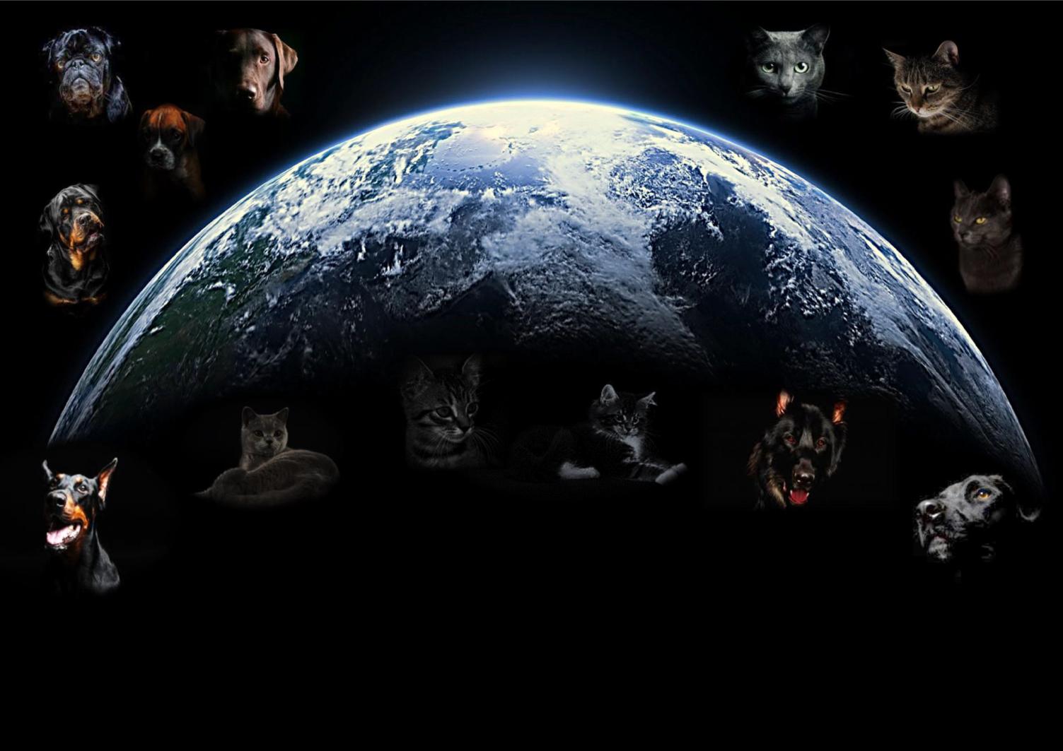 Hunde & Katzen Welt